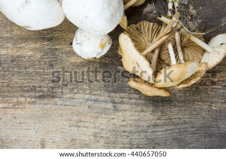 Variety of forest Mushrooms. selective soft focus image
