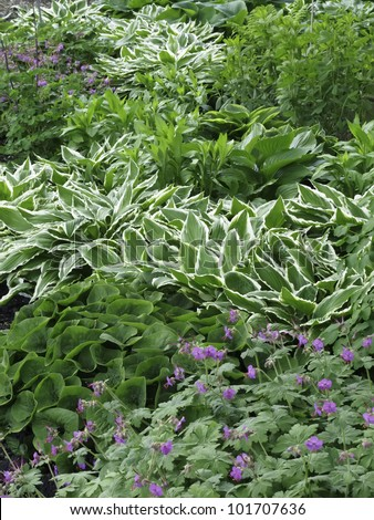 Variety Ground Cover Spring Garden Whiteedged Stock Photo