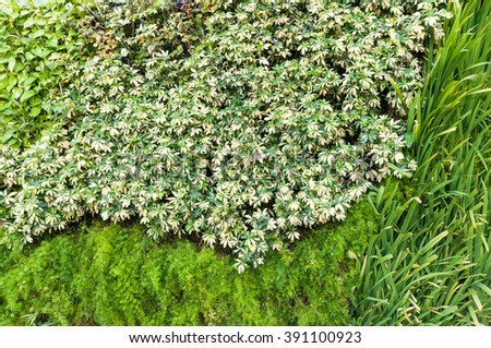 Variety Plants Vertical Garden Background Texture Stock Photo ...