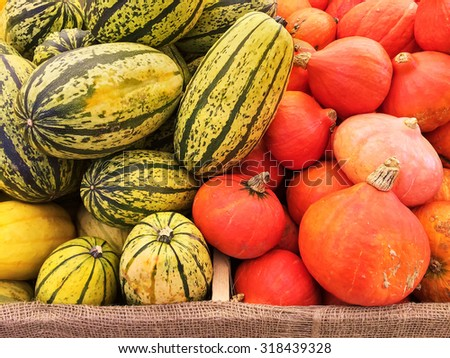 Variety of red and green squashes at the autumn market. - stock photo