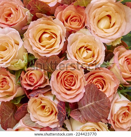 variety of rose flowers bouquet, natural background - stock photo