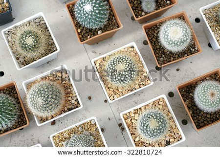 Variety of small beautiful cactus in the pot