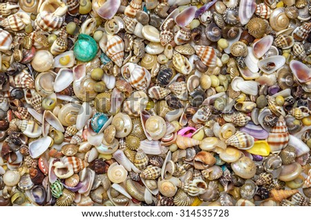 Variety of Small Sea Shells to Use as Background - stock photo