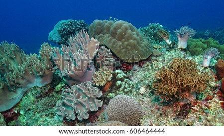 Variety of soft and hard coral shapes, sponges and branches in the deep blue ocean. Yellow, pin, green, purple and brown diversity of living clean undamaged corals.