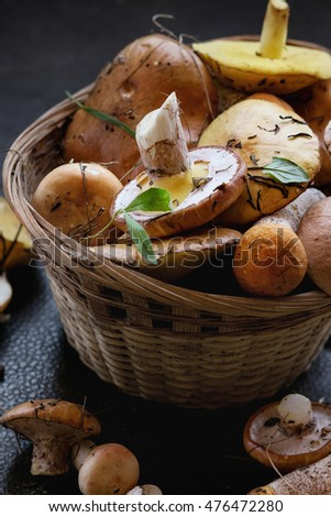 Variety of uncooked wild forest mushrooms yellow boletus, birch mushrooms, russules in basket over dark textured background. Rustic style, natural day light. Close up