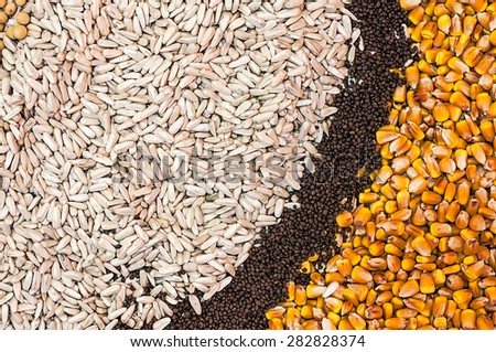 Various Agricultural Crop Seed as Abstract Full Frame Textured Background - stock photo