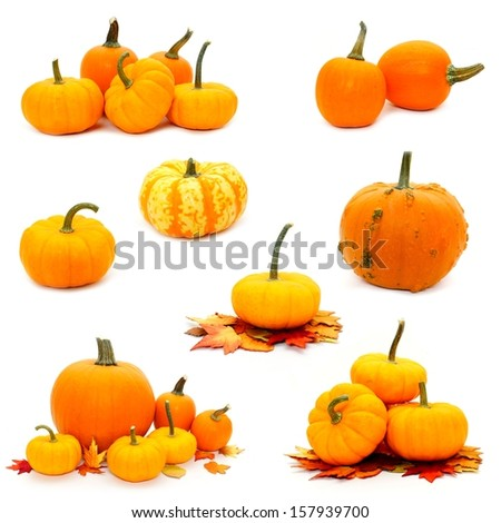 Various arrangements of autumn pumpkins individually isolated over white - stock photo