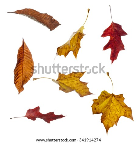 Various autumn leaves in different falling positions isolated against a white background