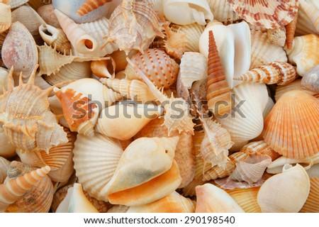 Various colorful mixed sea shells - stock photo