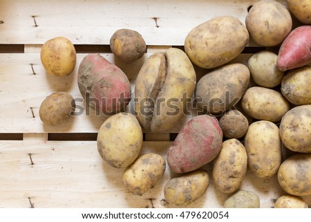 Various dirty organic potatoes in a wooden box as a natural still life for healthy and vegetarian food as top view background image for summer, autumn and thanksgiving