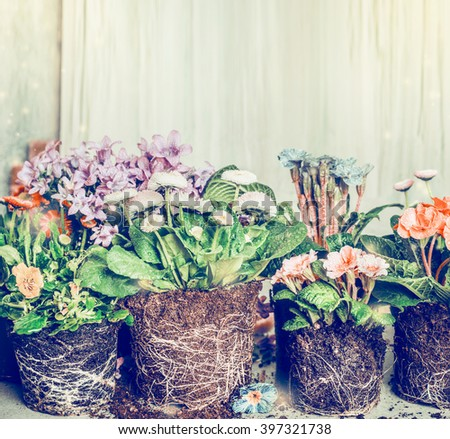 Various flowers for planting in garden or pots, retro toned - stock photo