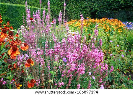 Various flowers in the garden - stock photo