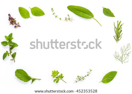 Various fresh herbs from the garden holy basil , basil flower ,rosemary,oregano, sage and thyme ,fennel ,peppermint and mustard leaves isolate on white background.