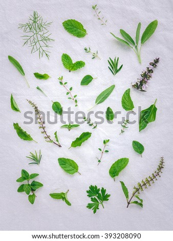 Various fresh herbs from the garden holy basil flower, basil flower,rosemary,oregano, sage,parsley ,thyme, pepper mint and fennel over white fabric background. - stock photo