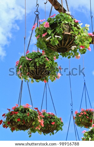 various garden flowers - stock photo