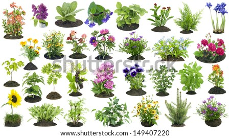 Various garden plants and flowers grow on the soil  compost heap collage set isolated  - stock photo