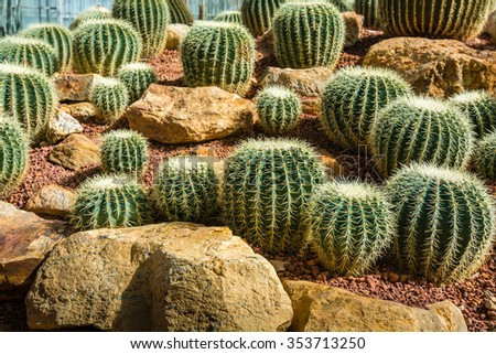 Various kind of cactus