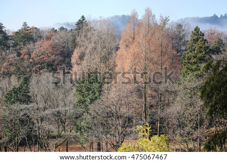 Various kind of trees in a park in autumn morning in Japan