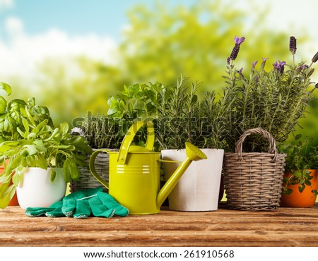 Various kinds of fresh herbs in flowerpots, placed on wooden table - stock photo