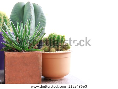 various of cactus on white background