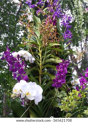 Various orchids are tied on the stainless steel structural poles are: White Phalaenopsis, purple, blue and yellow Dendrobium as well as Oncidium. Monopodial and sympodial types of orchids are used.
