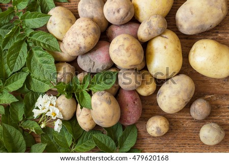 Various organic potatoes as natural still life for healthy and vegetarian food as top view background image for summer, autumn and thanksgiving arranged with green leaves and blossom of a potato plant
