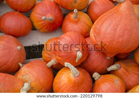 various pumpkins and squash for sale on a farm in the Netherlands