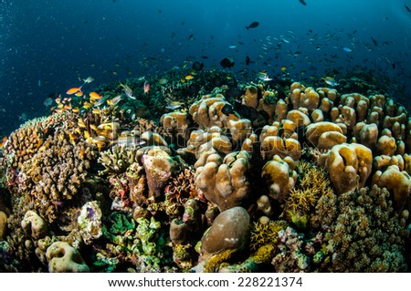 Various reef fishes swim above coral reefs in Gili, Lombok, Nusa Tenggara Barat, Indonesia underwater photo. There are Spotfin squirrelfish Neoniphon sammara, hard coral reefs and anthias