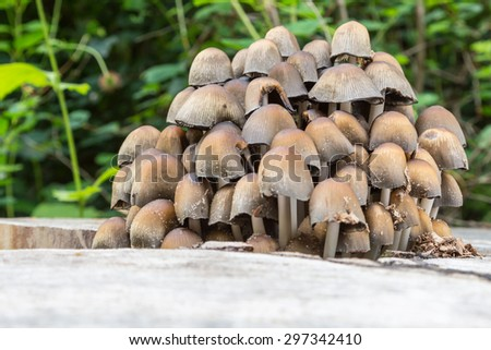 Various Small Mushrooms of Different Colours on Mossy Tree Stump - stock photo