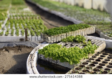 Various spice plants being grown in a greenhouse with a shallow depth of field. - stock photo