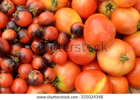 Various Tomatoes Close-up
