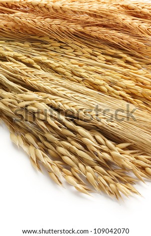 various type of cereals including oat, barley, paddy and wheat as background - stock photo