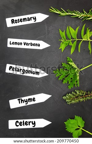 Various types of herbs with name tags on black background - stock photo