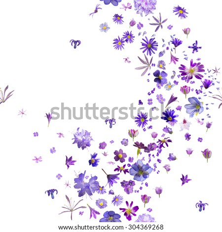 various, violet flower buds breeze, with hyacinths flying to the borders, repeatable and isolated on absolute white - stock photo