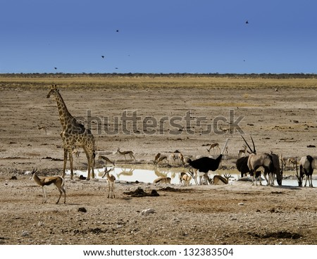 Various wild animals gathered at a water hole in Namibian desert. - stock photo