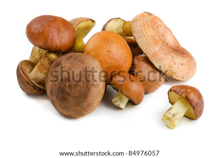 Various wild forest mushrooms isolated on white - stock photo