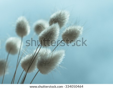 Vase of dried soft autumn flowers. Rabbit Tail Grass. vintage foto - stock photo