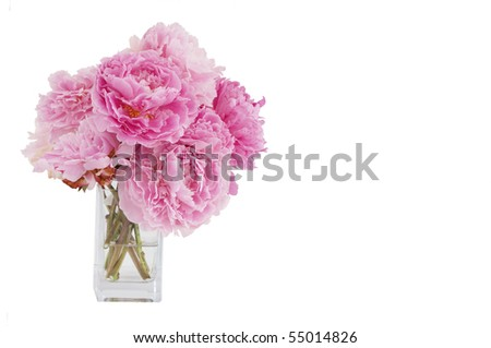 vase of pink peony flowers isolated on white background