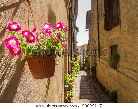 Vase with flowers in historic street