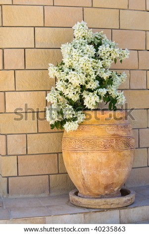 Vase with white flowers in front of a wall - stock photo