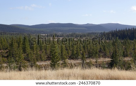 Vast areas of forests in rural area. Trees, spruce, pine and small lakes and sporadic bog, morass, mire, fen, wet areas in sight. - stock photo