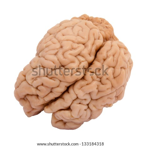 Veal brain isolated on white background - stock photo