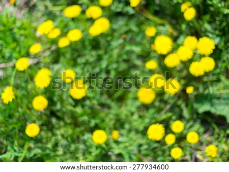 Vector abstract natural blurred background green and fresh. Summer defocused dandelions and grass, twirl bokeh. - stock photo