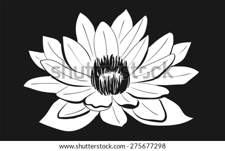 Vector Black and White Lotus flower drawn in sketch style on dark background. Line art - stock photo