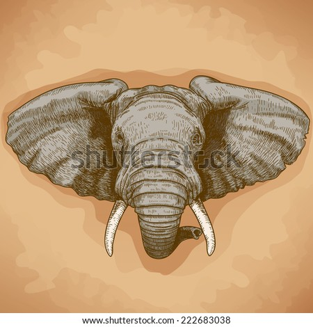 vector illustration of engraving elephant head in retro style - stock photo