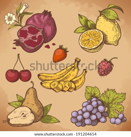 vector illustration of engraving sweet fruits and berries on the branch in retro style - stock photo