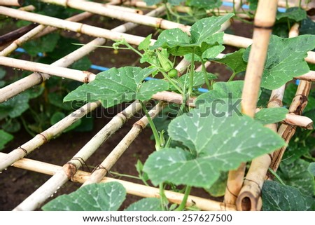 Vegetable - stock photo