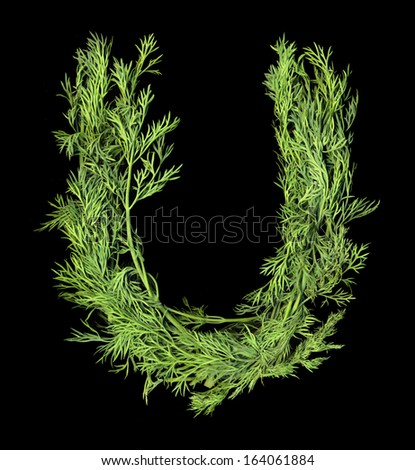 Vegetable Alphabet of sprigs of dill isolated on a black background. Letter U - stock photo