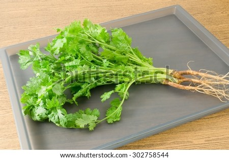 Vegetable and Herb, Bunch of Fresh Green Parsley, Chinese Parsley or Coriander for Seasoning in Cooking on A Tray. - stock photo