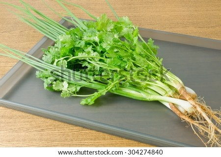 Vegetable and Herb, Bunch of Green Parsley, Chinese Parsley or Coriander and Scallion for Seasoning in Cooking on A Tray. - stock photo